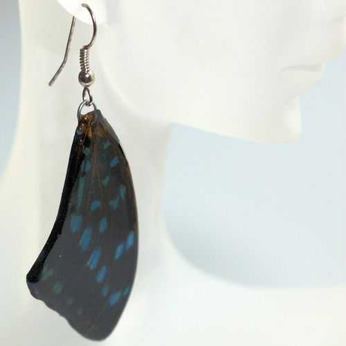 Earrings papilio bromius, Blue Black