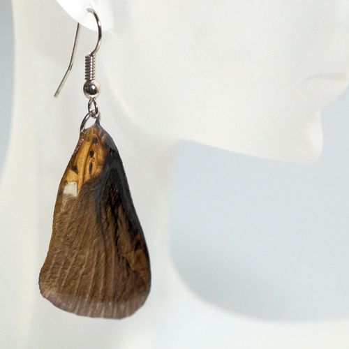 Earrings papilio bromius, Brown Black