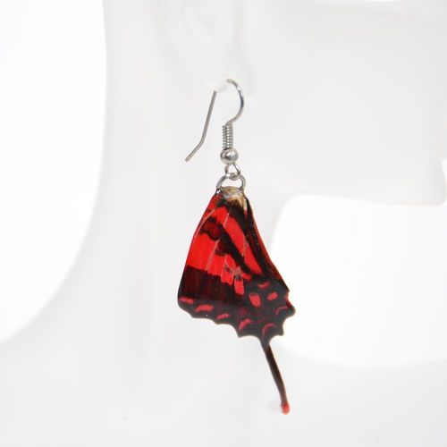 Earrings Graphium Weiskei, Red Black