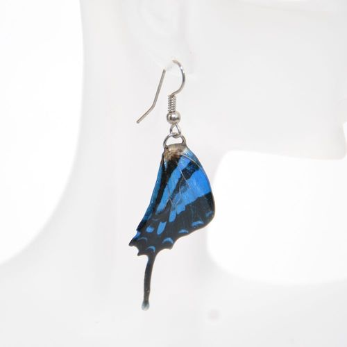 Earrings Graphium Weiskei, Blue Black