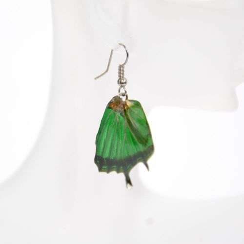 Earrings Graphium Weiskei Green Black 2