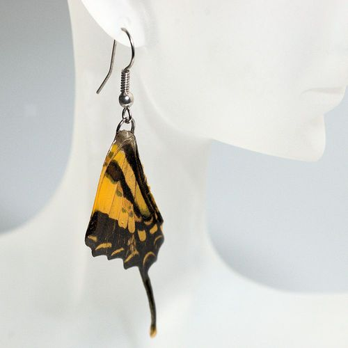 Earrings Graphium Weiskei, Yellow Black